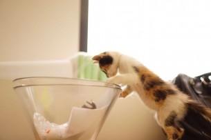 Povestea induiosatoare a Verei, pisica rasfatata din Veranda Mall